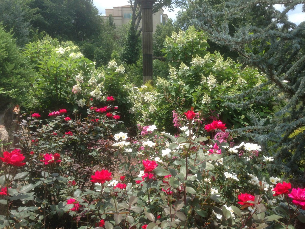 rose garden with other floral elements