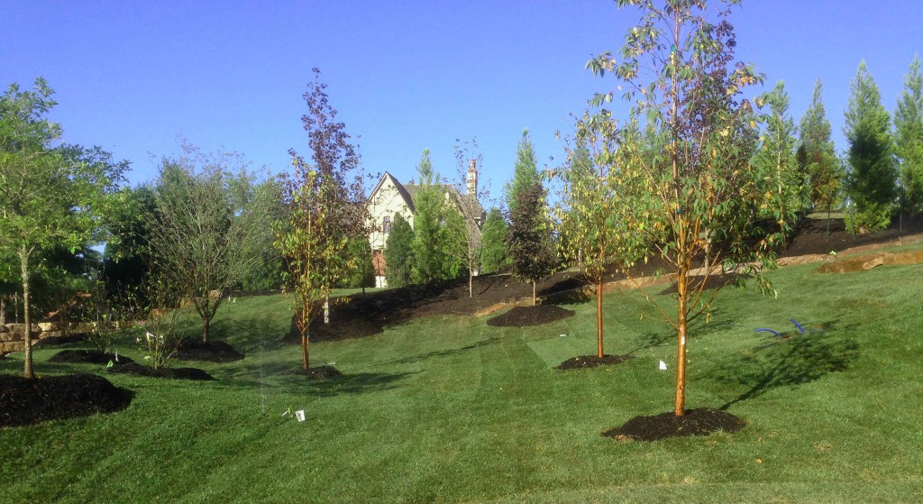 another view of new trees
